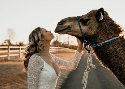 Summer-Land-Camels